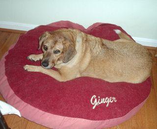 Gingerpatra2